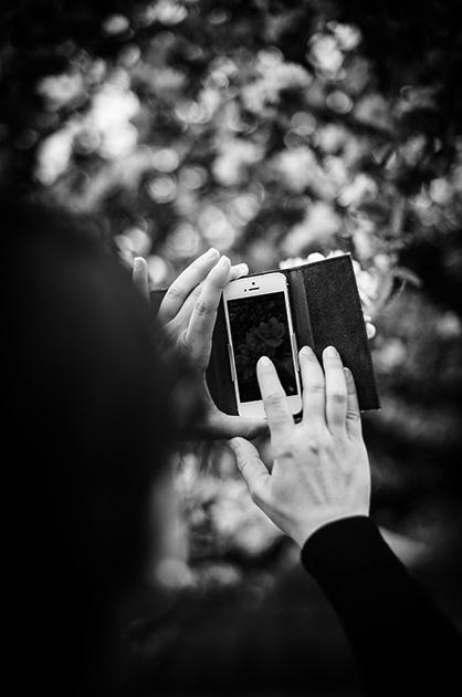 Bild von einer Frau, die mit einem Smartphone Blüten eines Baumes fotografiert.