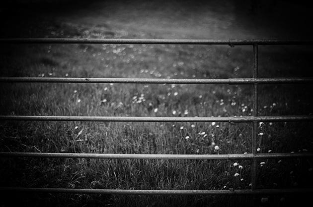 Landschafts-Fotografie – Kuhgitter vor einer Wiese