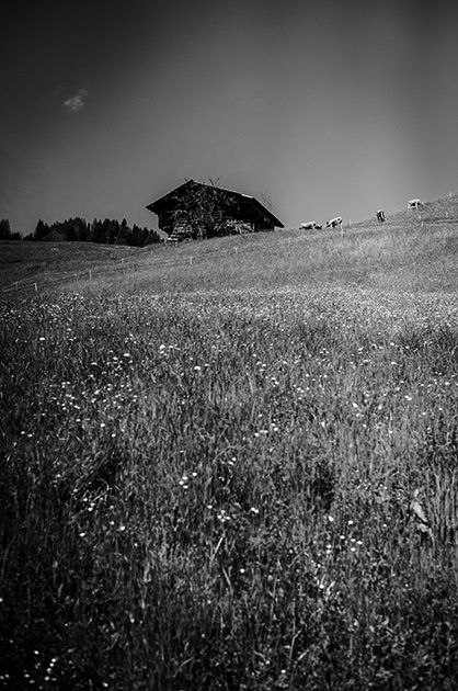 Wiese mit grasenden Kühen und einem Chalet an einem Berghang
