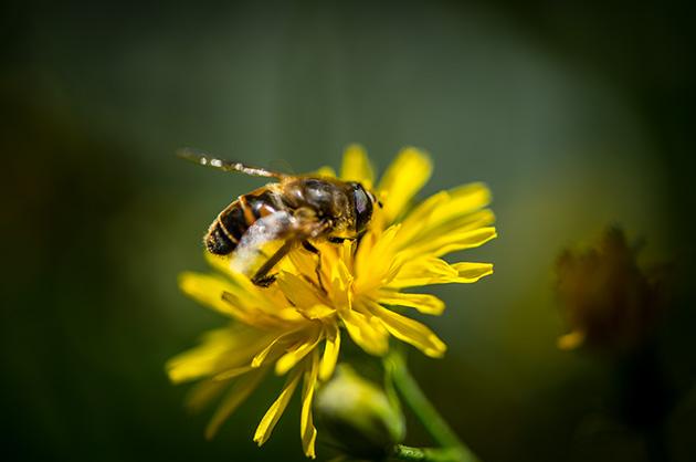 Nikon D810 – Insekt auf einer gelben Blüte, Makro-Fotografie