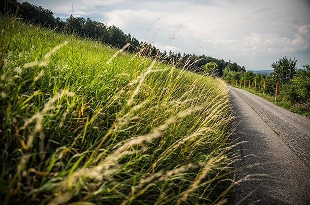 Wiese und Feldweg auf dem Gurten