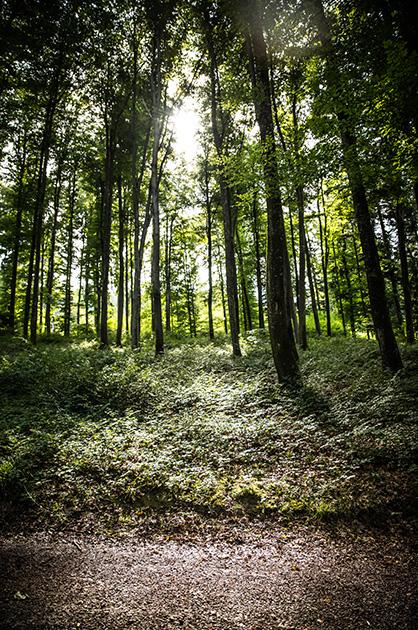 Gurten-Wald