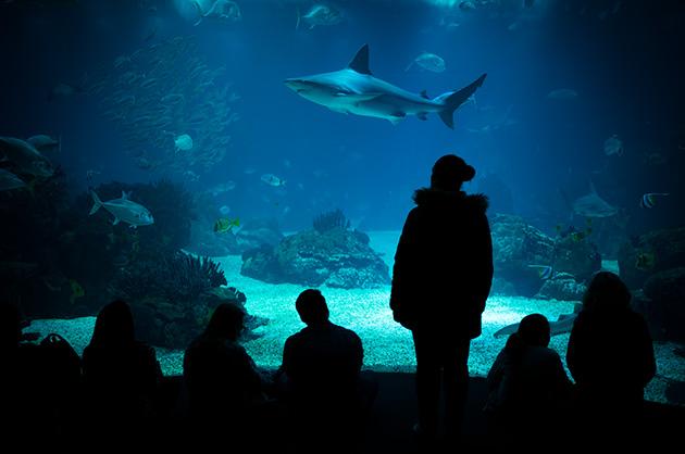 Besucher und Besucherinnen betrachten die Fische im Hauptaquarium des Qualle im Oceanário de Lisboa. Ein Haifisch schwimmt vor ihnen durch.
