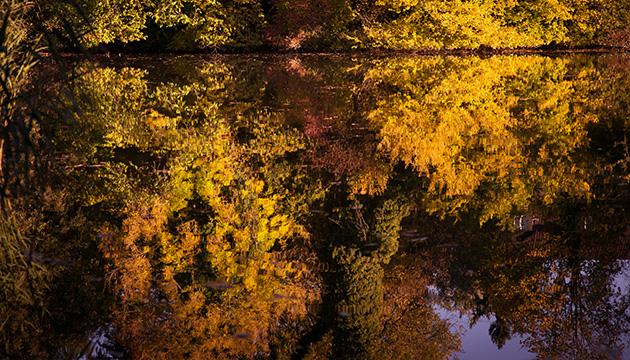 Fotografie – Herbstgrüsse vom Egelsee. Beitragsbild mit herbstlichen Laubbäumen, die sich im See spiegeln.