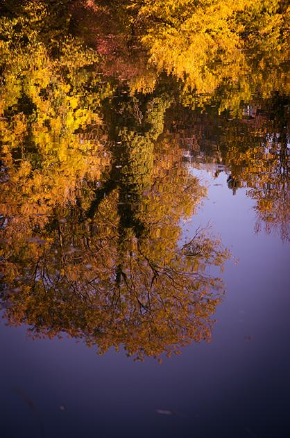Herbstliche Laubbäume, die sich im Wasser spiegeln.