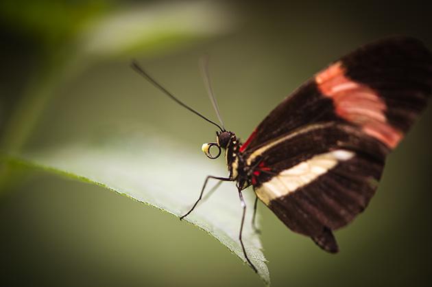 Schmetterling im Papillorama in Kerzers