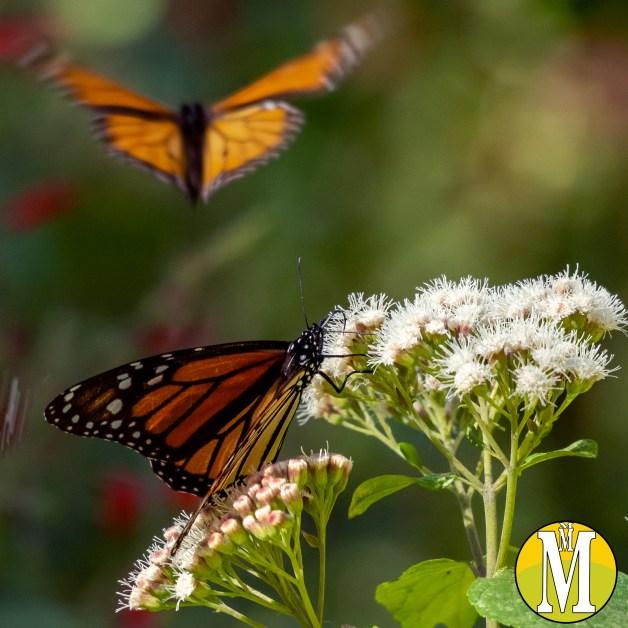 2-mariposas.jpg