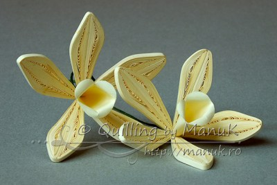 Quilled Vanilla Orchid Flowers