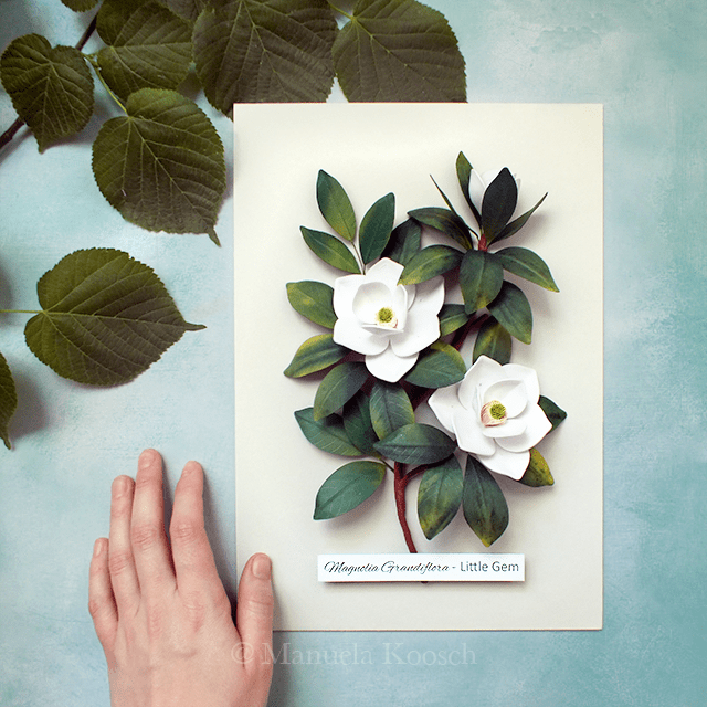 Magnolia Wall Art - Paper Quilling Magnolia Botanical Illustration