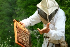 manuka honey, honeybee swarms, rehoming hives, cowboy hives