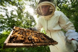 beekeeper, honey, conservation, hivemind, manuka honey