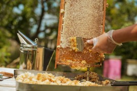 beekeeping, manuka honey