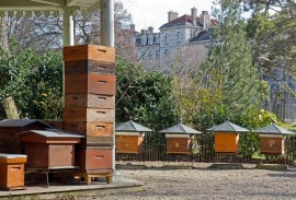 San Francisco honeybees, luxury hotels, Canada honeybee, New York City, best bees