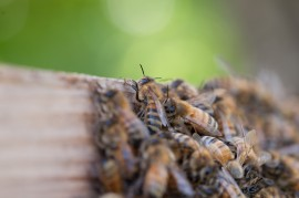 harmful pesticides, honeybees, miracle-gro, pest control