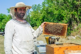 hive poisoning, honeybees, beekeepers, manuka honey