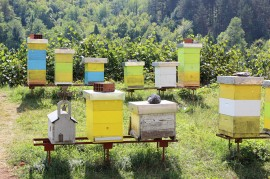 manuka honey, taranaki honey,, theft