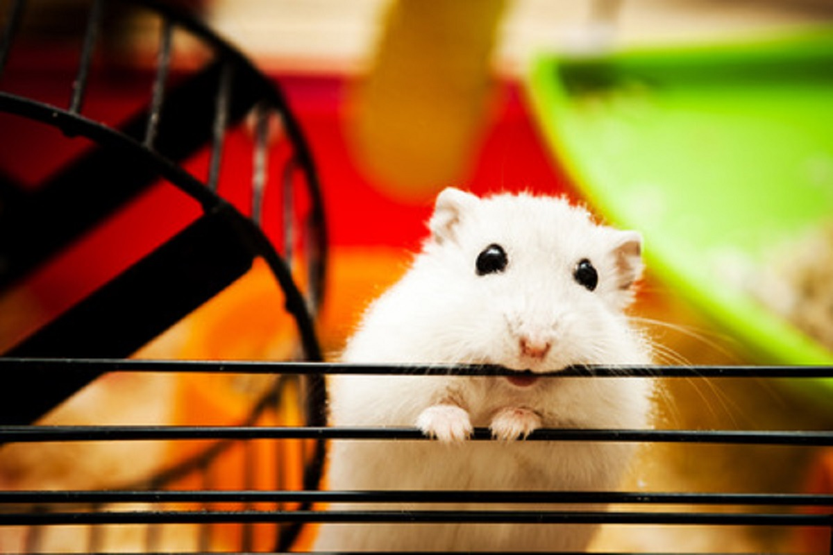 How to Handle Common Hamster Problems - Manuka Honey USA