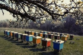 Bee, Hives,Mumbai, Beekeeping,
