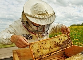 beekeeper, Manuka honey, New Zealand, beekeeping