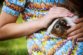 Guinea Pig, Pet, Care, Treatment