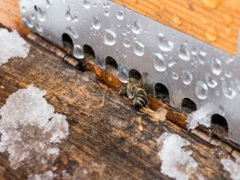 Beekeeper, Bee, Honey, Warm Winter
