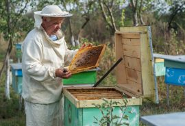 crowdfunding, beekeeping, honey bee