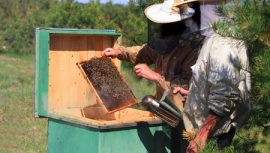 beekeeper, homelessness, honeybee, honey