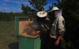 beekeepers, novices, honeybees