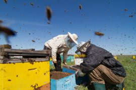 beekeepers, honey, California