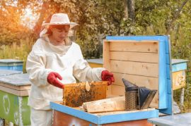 beekeeper, honeybee, honey