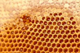 honeycomb, Etruscans, beekeepers