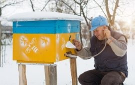 winter, beekeeper, honeybees, Colorado