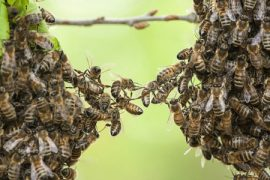 bee swarm, honey, ceiling, bee hive