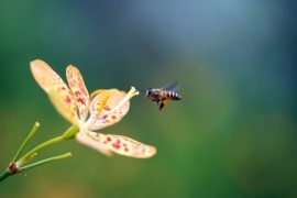 pollinators, honeybees, pesticides