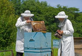 honey bees, bee vets