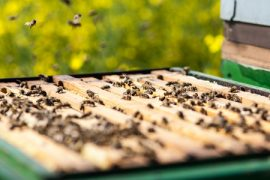 classical conditioning, honey bees, hives