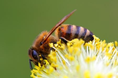 Bienen Allergie