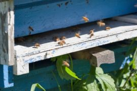 Brooklyn beehive, urban beekeeping, honey