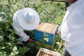 beekeepers, honey bees