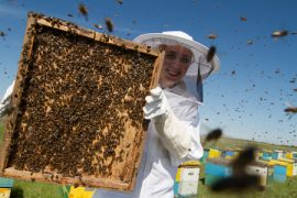 Iowa, Honey Queen, beekeeping, honey bees