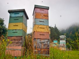 New Zealand, bee hives, beekeeping