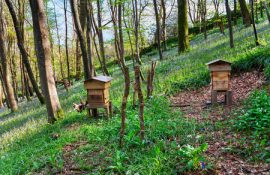 British honey bees, Syria, refugee