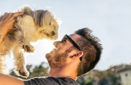 dog owners, Manuka honey, dog care, pet care