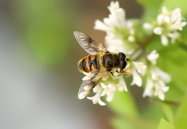 pesticides, neonics, honey bees, pollinators