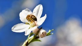 Manuka honey, New Zealand, beekeeping