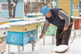 winter beekeeping, honey bees