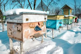 winter beekeeping, vandals, honey bees