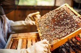 jason conley, beekeeper, honeybees
