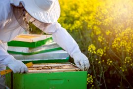 honey bees, honeybees, beekeeper