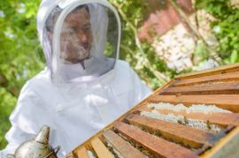 beekeeper, honey bees